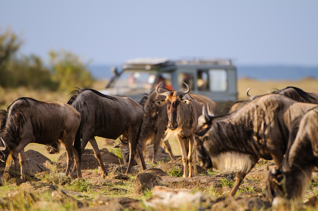 10 C4 reasons to visit the Masai Mara