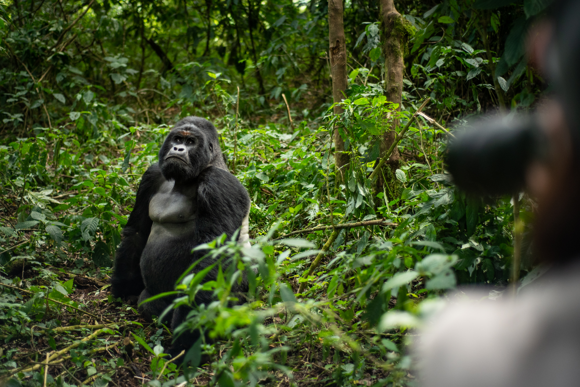 The reality of Virunga National Park & a safari you will never forget!