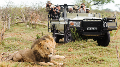 Premier Photo Safaris