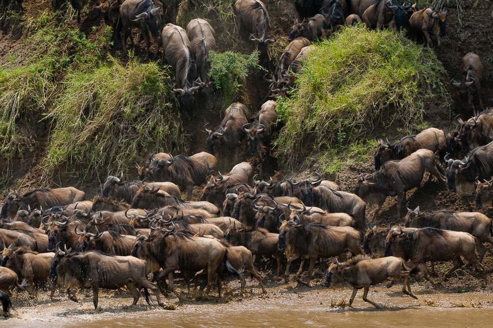 Masai Mara Exclusive Safari 2019
