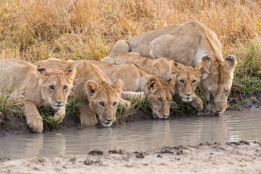 Masai Mara Exclusive Safari 2018