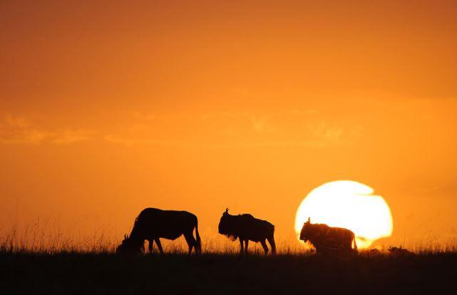 Kenya Travel Package